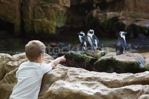 Little boy looking at penguins Stock photo © wavebreak_media