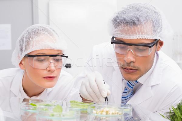 Científicos examinar plato laboratorio mujer vidrio Foto stock © wavebreak_media