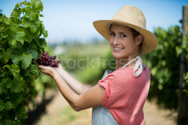Portrait of happy farmer holding red grapes Stock photo © wavebreak_media