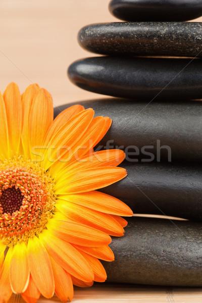 Zdjęcia stock: Pomarańczowy · słonecznika · czarny · kamienie