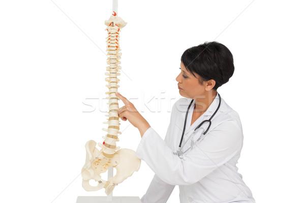 Foto stock: Feminino · médico · olhando · esqueleto · modelo · branco