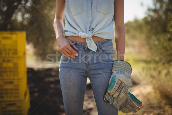 Mid section of woman with gloves standing at olive farm Stock photo © wavebreak_media