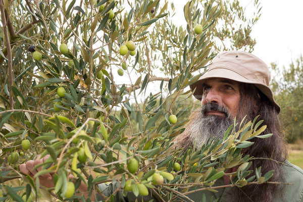 Man observing olives on plant Stock photo © wavebreak_media