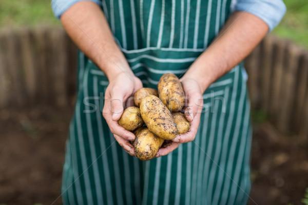 Male gardener holding harvested potatoes Stock photo © wavebreak_media