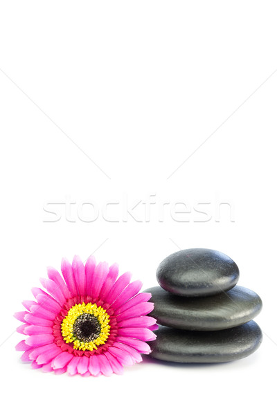 Pink and yellow flower touching piled up pebbles on a white background Stock photo © wavebreak_media