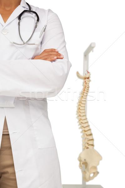 Középső rész női orvos csontváz modell közelkép Stock fotó © wavebreak_media