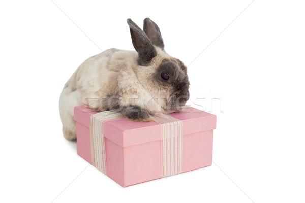 Bolyhos nyuszi rózsaszín ajándék doboz fehér húsvét Stock fotó © wavebreak_media