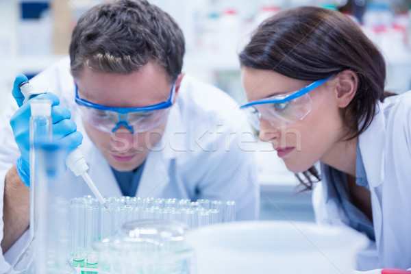 Chemist team working with pipette and test tube Stock photo © wavebreak_media