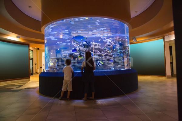 Weinig broers en zussen naar vis tank aquarium Stockfoto © wavebreak_media