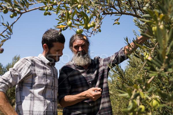 Friends interacting while examining olive on plant Stock photo © wavebreak_media