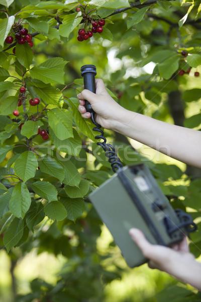 Radiação comida mão natureza verde Foto stock © wellphoto