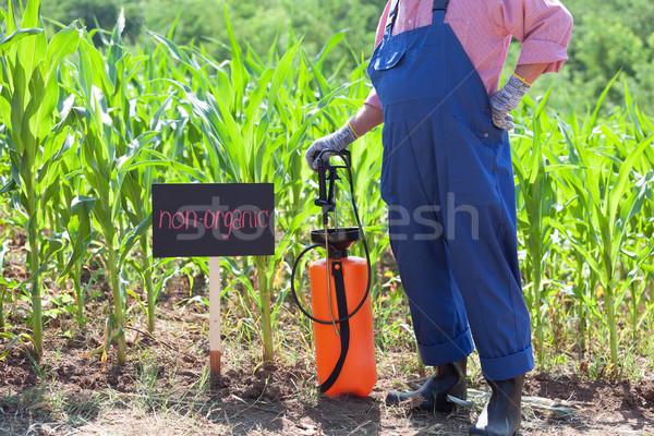 Non-organic maize field Stock photo © wellphoto