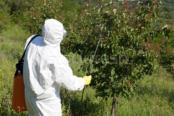 Fruit tree spraying  Stock photo © wellphoto