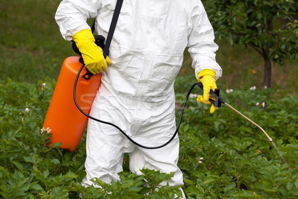 Pesticide spraying. Non-organic vegetables. Stock photo © wellphoto