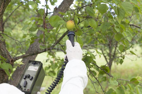 излучение плодов природы фрукты среде Сток-фото © wellphoto