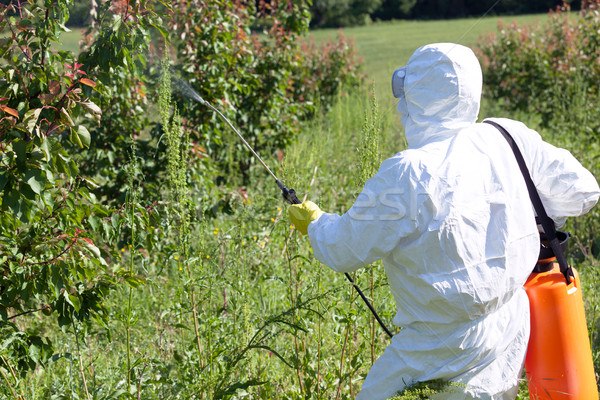 Stock photo: Farmer spraying toxic pesticides or insecticides in fruit orchar