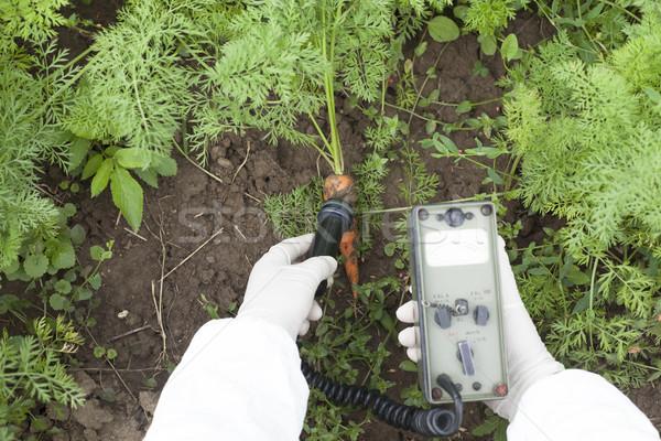 Promieniowanie marchew charakter warzyw gleby Zdjęcia stock © wellphoto