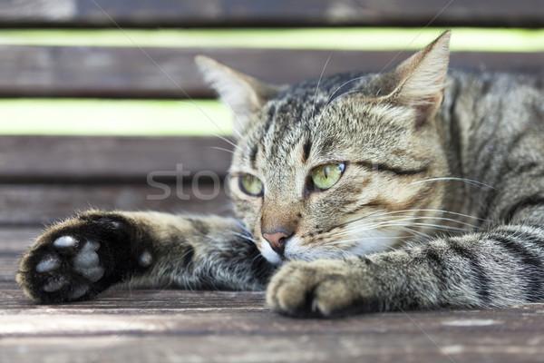 Kedi gözler evcil hayvan görmek sevimli Stok fotoğraf © wellphoto