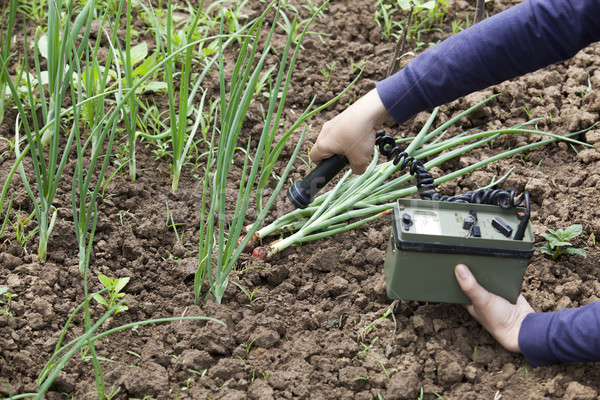 Radyasyon gıda el bahçe bitki Stok fotoğraf © wellphoto