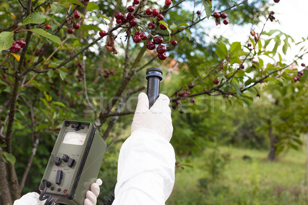 Radiação árvore frutífera natureza fruto cereja Foto stock © wellphoto