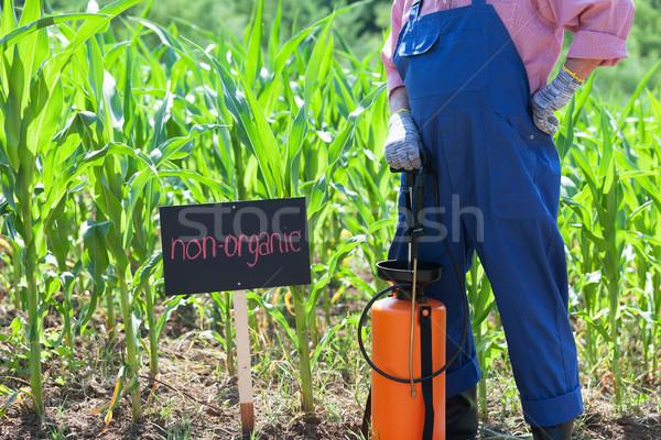 Maíz campo agricultor pie hombre naturaleza Foto stock © wellphoto