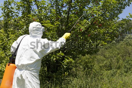 Pesticide spraying  Stock photo © wellphoto