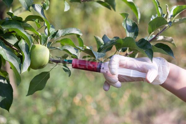 Genetically modified apple Stock photo © wellphoto