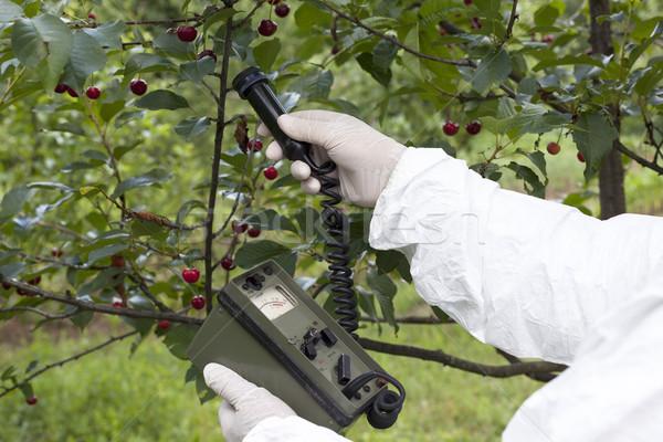 излучение плодов природы фрукты Вишневое Сток-фото © wellphoto