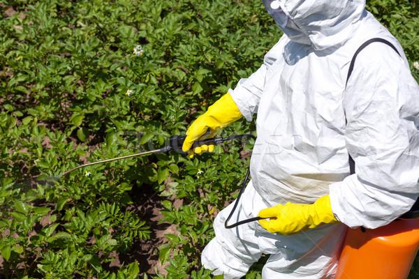Farmer spraying toxic pesticides in the vegetable garden. Non-organic Stock photo © wellphoto