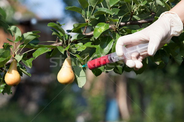 Genetically modified fruit Stock photo © wellphoto