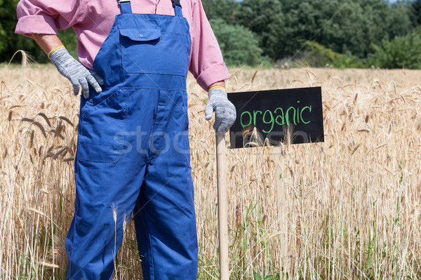 Organic wheat field Stock photo © wellphoto