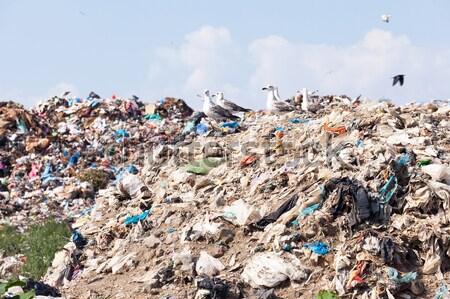Szeméttelep szemét szennyezés környezet újrahasznosítás szemét Stock fotó © wellphoto