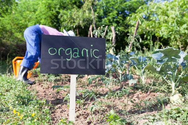 Organic vegetable garden Stock photo © wellphoto