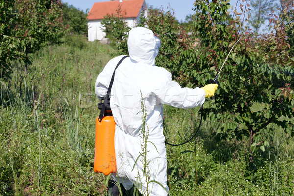 Pesticide spraying. Pest management. Stock photo © wellphoto