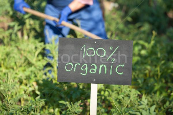 Farmer working in the organic vegetable garden Stock photo © wellphoto