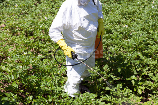 Pesticide spraying. Non-organic vegetables. Stock photo © wellphoto