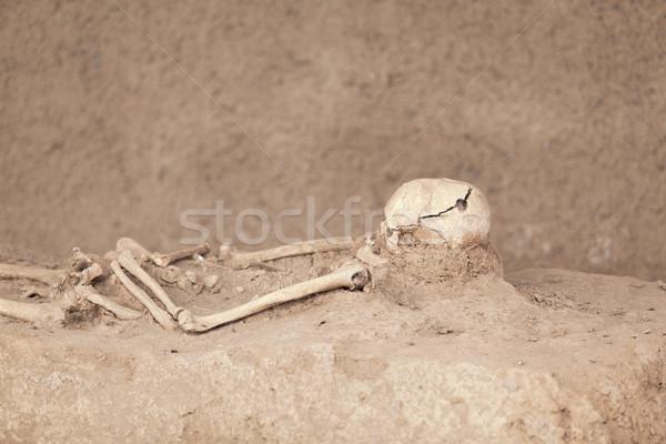 скелет череп смерти жизни мертвых человека Сток-фото © wellphoto