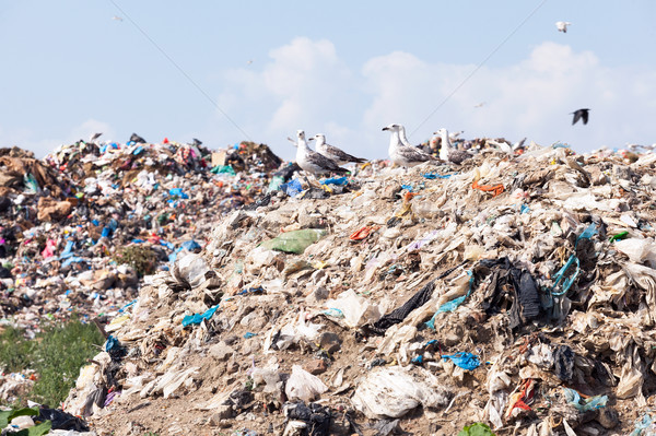 Landfill site. Garbage dump. Stock photo © wellphoto