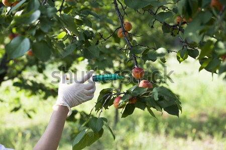 GMO fruit Stock photo © wellphoto