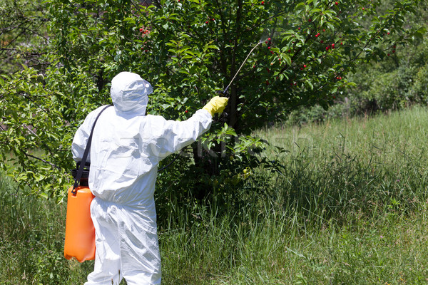 Spraying a fruit orchard Stock photo © wellphoto
