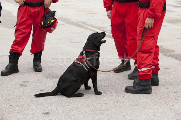 Resgatar cão serviço pessoal uniforme Foto stock © wellphoto