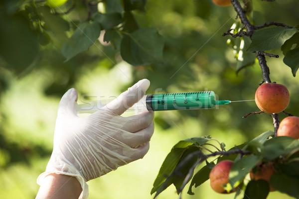 GMO fruit Stock photo © wellphoto
