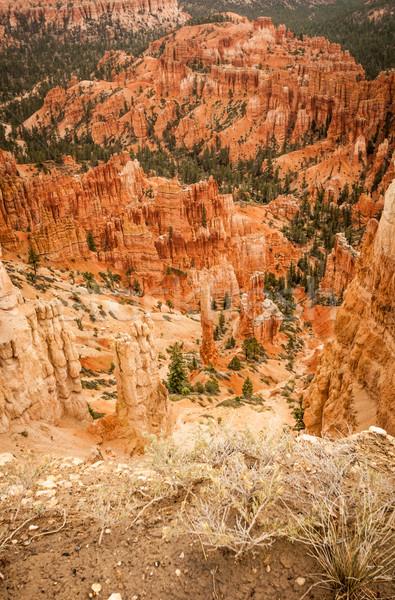 Kanyon kövek fák amfiteátrum nyugat USA Stock fotó © weltreisendertj