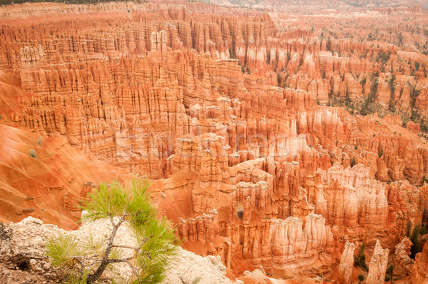 Bryce Canyon amphitheater 2013 Stock photo © weltreisendertj