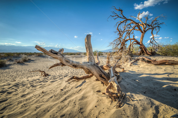 Death Valley dunes wood Stock photo © weltreisendertj