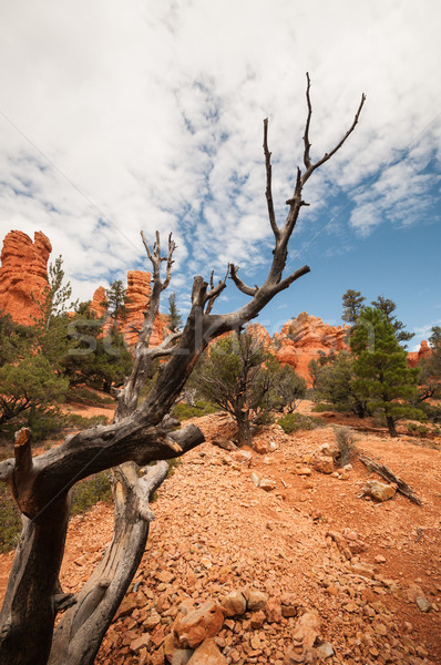 dry branch Bryce Canyon Stock photo © weltreisendertj