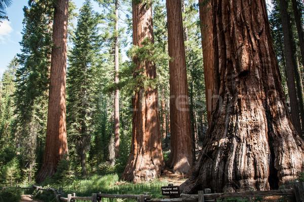 Yosemite soltero tres cielo árbol carretera Foto stock © weltreisendertj