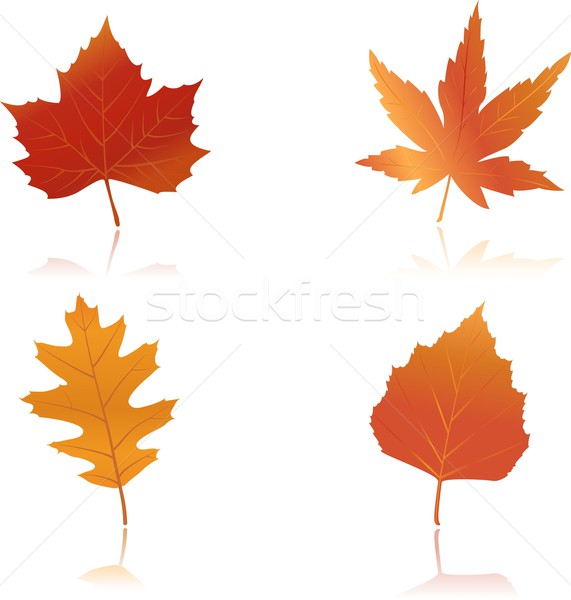 Vibrantly colored autumn leaves Stock photo © wenani