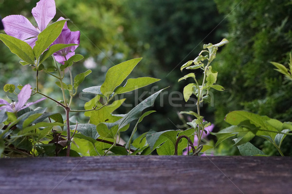Verde primavera verano jardín vista flor Foto stock © Wetzkaz