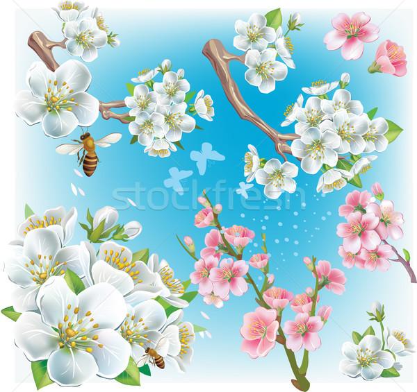 Kersenbloesem boom blad japans tak Japan Stockfoto © Wikki